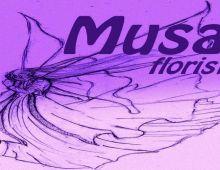 Musa Floristas