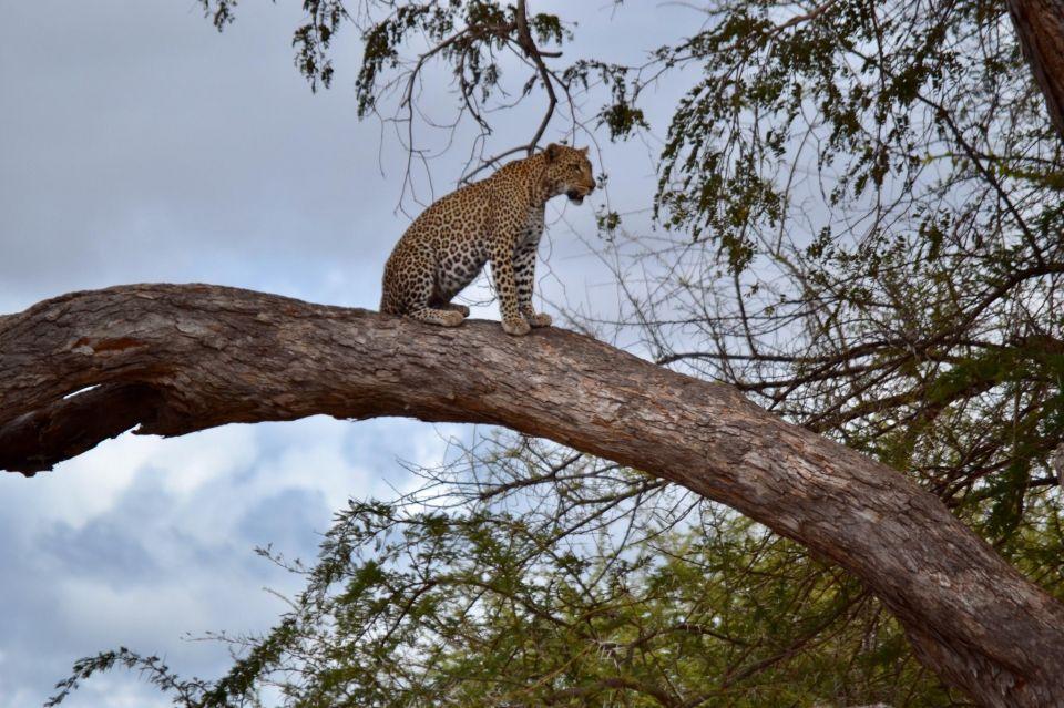 Nunca dejéis de pensar a donde queréis viajar, será un buen entretenimiento, mientras estemos estas semanas en casa. Es un buen ejercicio para cargarnos de positivismo.<br /><br />La propuesta del día es un Safari por Kenia