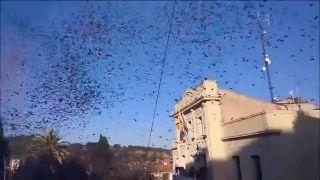 Explosión de confetti y serpentinas by Pantera Rosa Produzione